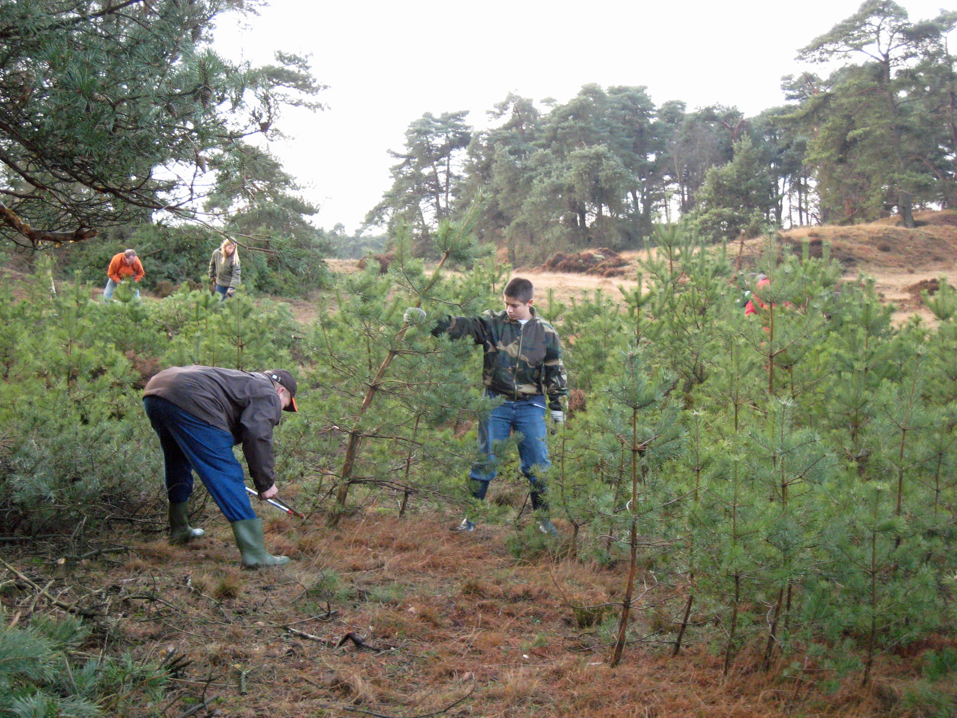 Werken staatsbosbeheer