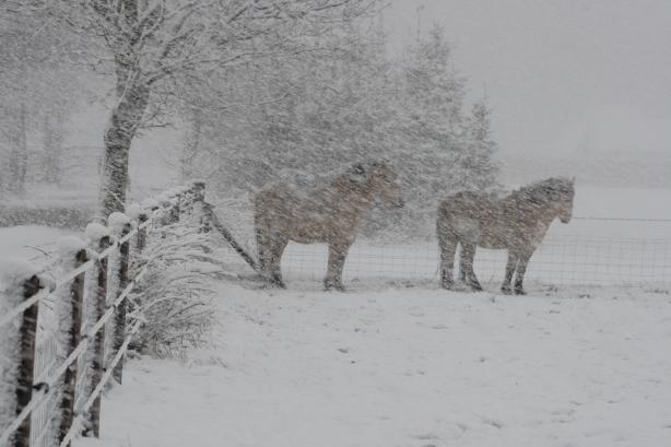 IMG_5318 paardjes in sneeuw op 2e paasdag
